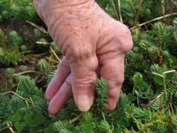 Jak rozpoznać i leczyć reumatyzm